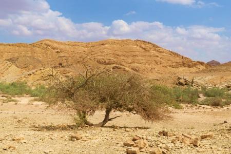 Beer Sheva desert